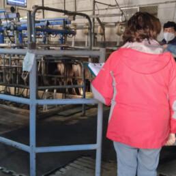 Certificación Bienestar Animal