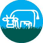 Icono grass fed